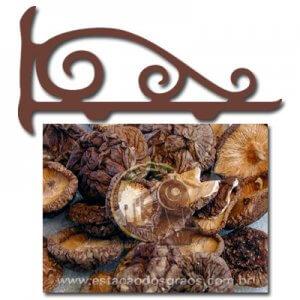 Cogumelo Shitake Inteiro (Fracionado - Embalagem 100g)